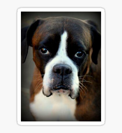 Erinnerung an Arwen - Boxer Dogs Series Sticker