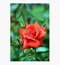 Dolly Parton Red Rose Photographic Print