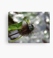 Green Stink Bug Canvas Print