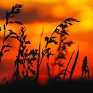 Roadside Grasses Sunset by stormypleasures