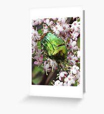 rose chafer (Cetonia aurata) Greeting Card