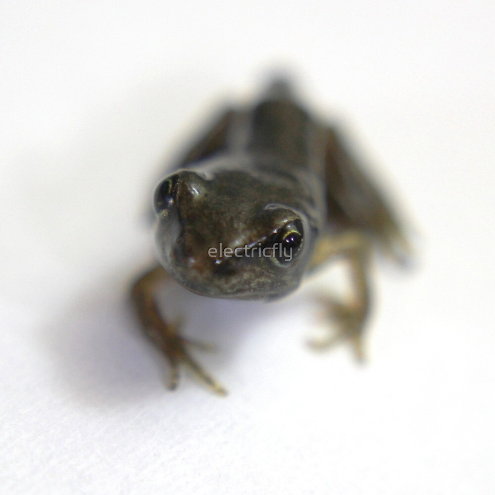 Frog on white by electricfly