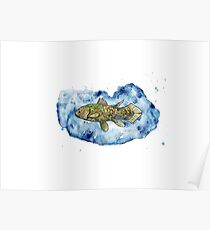 Coelacanth in a splash of watercolour Poster
