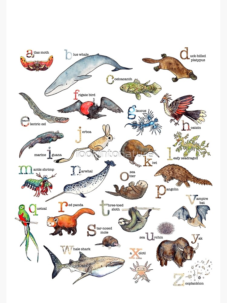 A to Z of Amazing Animals by lookintonature