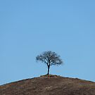 A simple little hill-top tree, Val D'Orcia, Tuscany, Italy by Andrew Jones