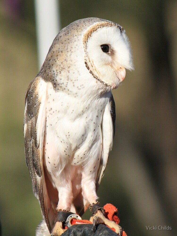 Barn Owl in all his Glory by Vicki Childs