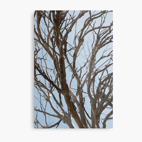 Bare tree branches against a pale spring sky Metal Print