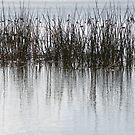 Birds on the lake by Jack Bridges