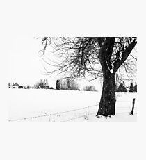 Bare Tree In Snow Photographic Print