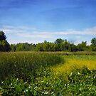 Sheldon Marsh - Summer Meadow 2 by Shawna Rowe
