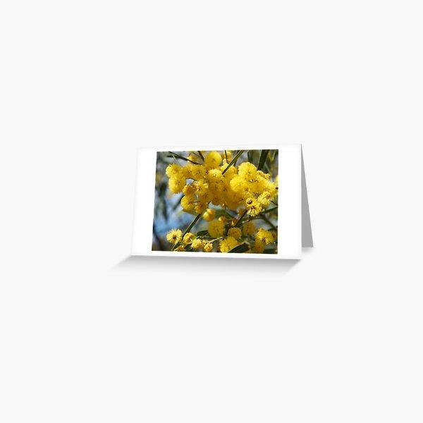Wattle flowers 2 Greeting Card