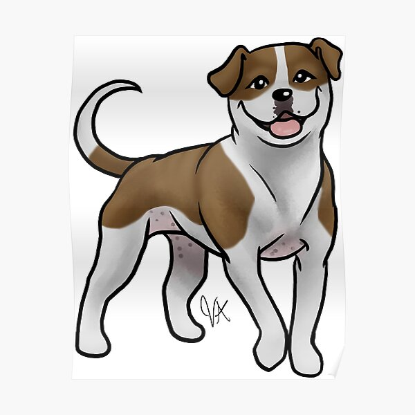American Bulldog - White and Brown Poster