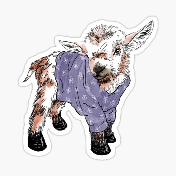 Baby goat in a sweater  Sticker