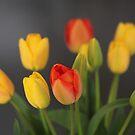 I do love tulips . © Andrzej Goszcz by © Andrzej Goszcz,M.D. Ph.D
