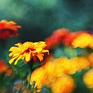 Gorgeous Marigolds by Kasia-D