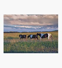 Sunset Horses Photographic Print