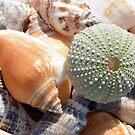 Beach Souvenirs by Lisa Kent