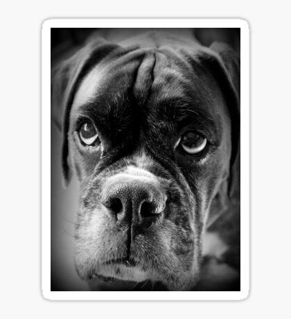 Oh bitte ... Lassen Sie es Regen Cookies ~ Boxer Dogs Series ~ Sticker