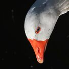 Goose portrait by turniptowers