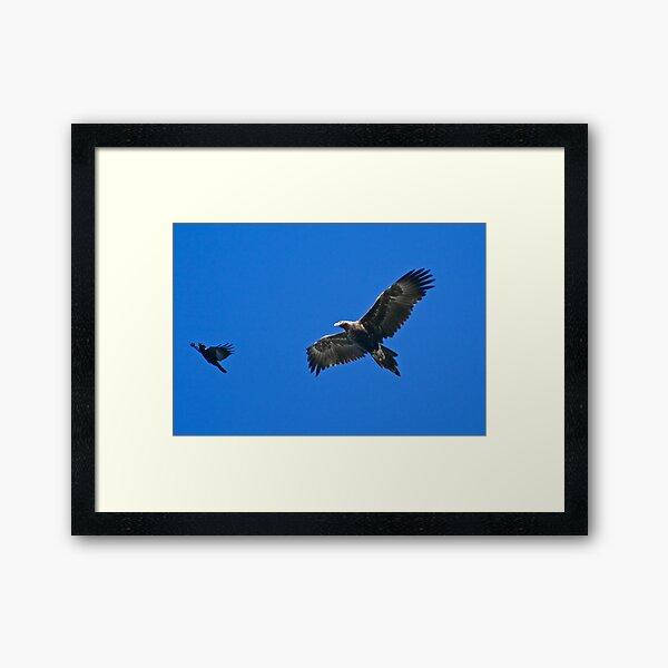 RAPTOR ~ Wedge-tailed Eagle VESRVYS7, Forest Raven, by David Irwin Framed Art Print