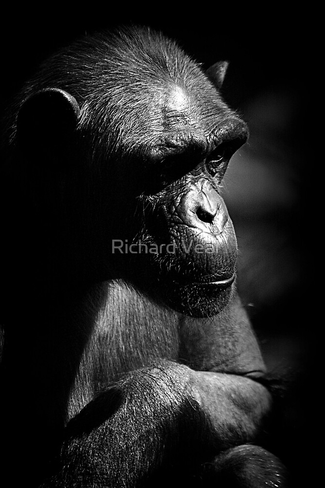 Contemplation by kcphotography