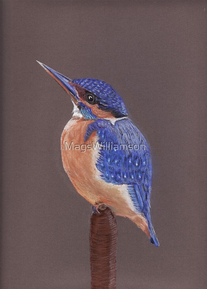 The Kingfisher by MagsWilliamson