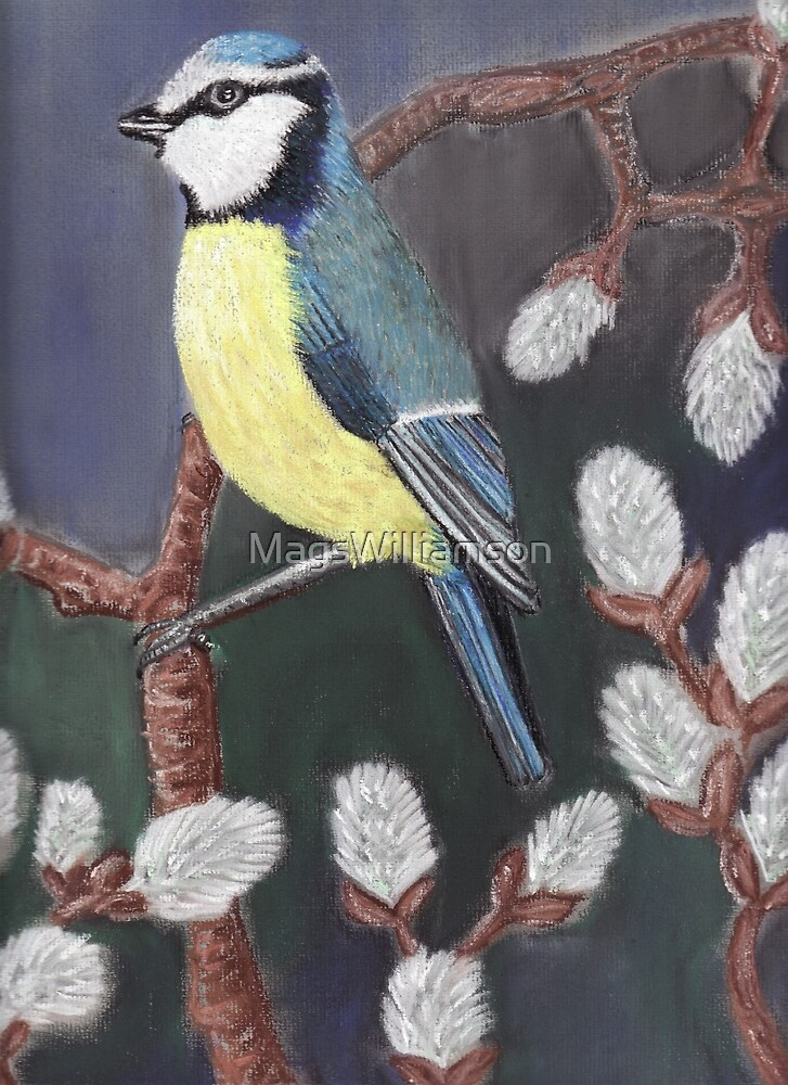 Blue Tit by MagsWilliamson