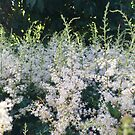 Meadowsweet in the Woods by astrantium