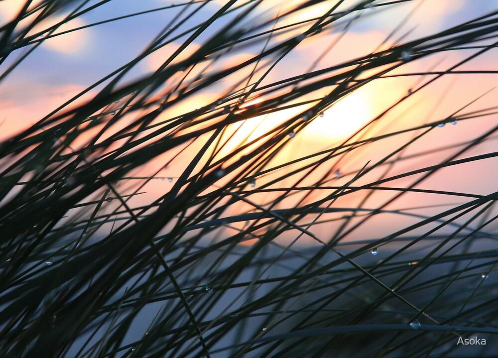 Dawngrass by Asoka
