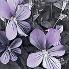 Violet by astrantium