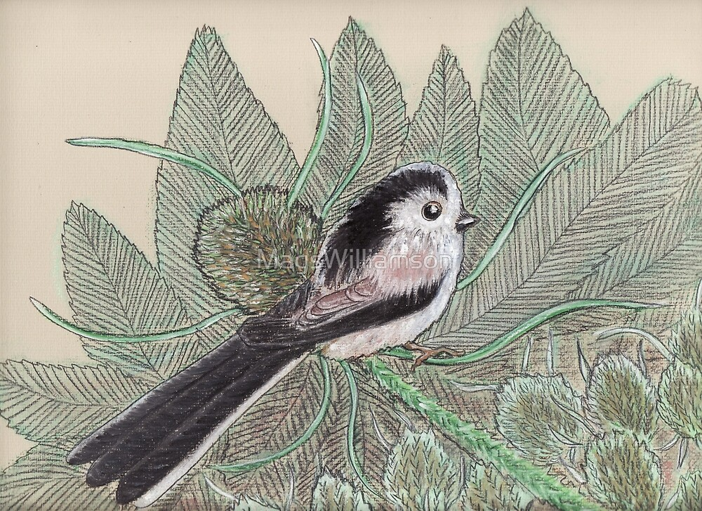 Long Tailed Tit by MagsWilliamson