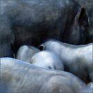 Blue pigs by Bluesrose