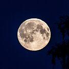 Full moon by soulmamaarts