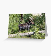 RMNP Bull Moose Greeting Card