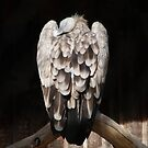 Sleeping eagle by Bluesrose