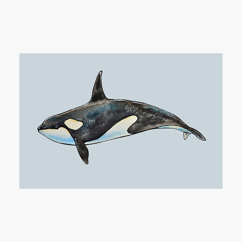 Orca on blue Photographic Print