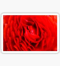 Closeup red English Rose flower background Sticker