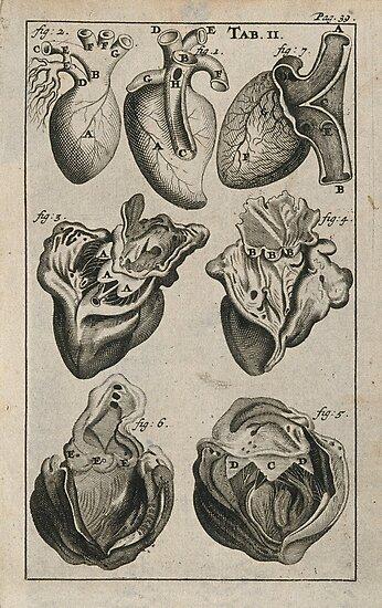 Pósters «Dibujos anatómicos del corazón» de TruantMuse | Redbubble