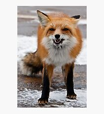 Goofy Fox Photographic Print