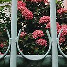 The Mint Fence no. 1 by Bethany Helzer