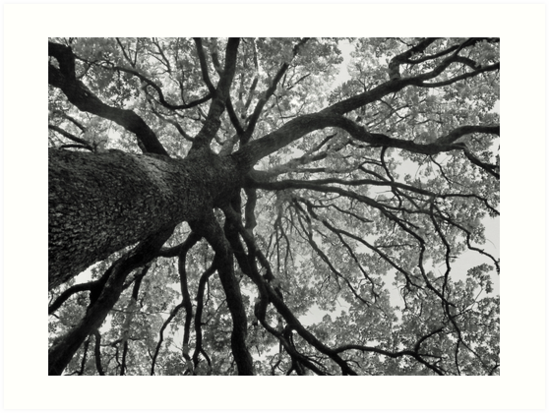 Up an Oak tree by MikeOimages