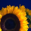 Sunflowers on blue by Purrnickerty