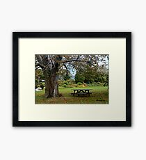 Picnic Table under an Ancient Tree Framed Print