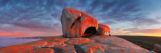 ผลการค้นหารูปภาพสำหรับ kangaroo  sunrise