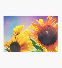 Summer Sunshine Day Photographic Print