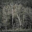 Waldrand X (forest edge no. 10) by doubleblind