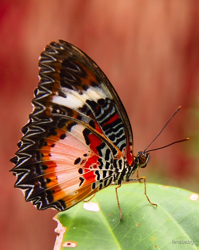 orange-brown butterfly by lensbaby