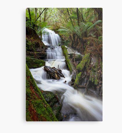 Myrtle Valley Falls - Mt Wellington -Tasmania Metal Print