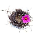 Empty nest.... by Yool