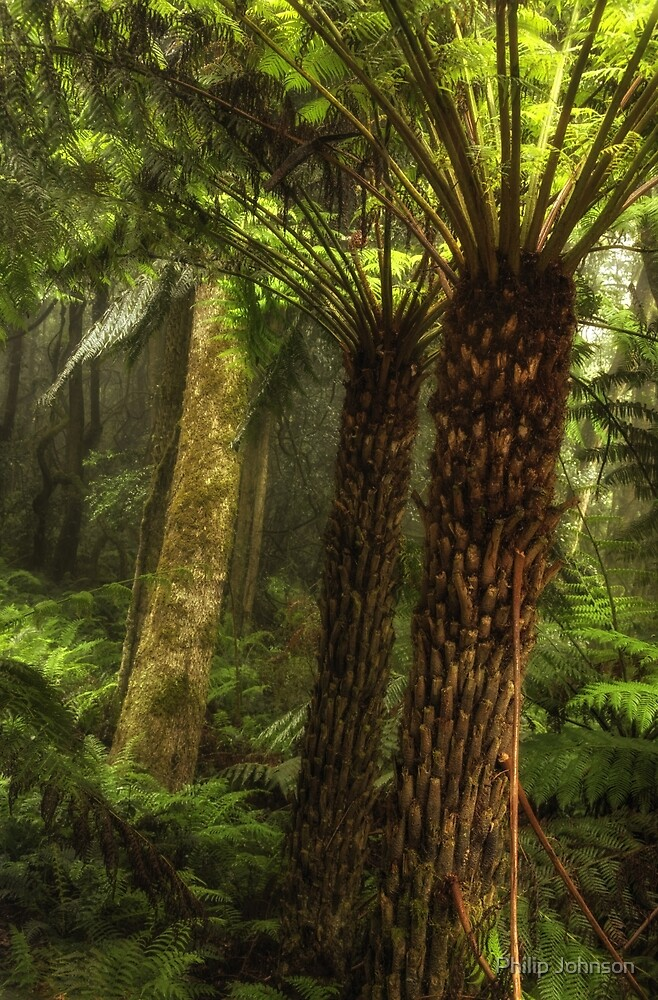 Rain Forest  Melody - Mount Wilson NSW - The HDR  Experience by Philip Johnson
